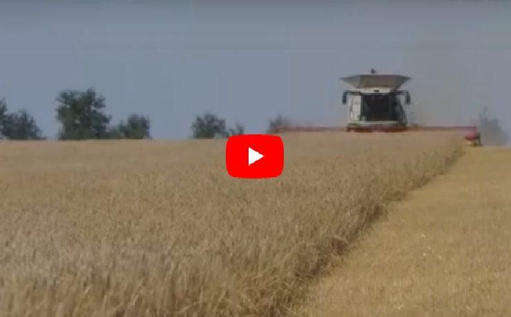 Caratula video alimentos la conquista humana